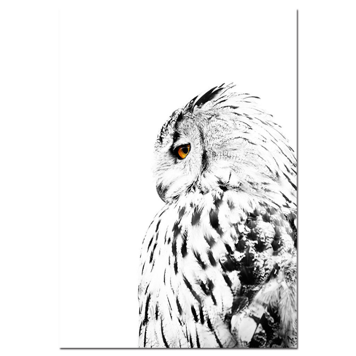 Details about feather white owl black white canvas art poster nordic landscape print home