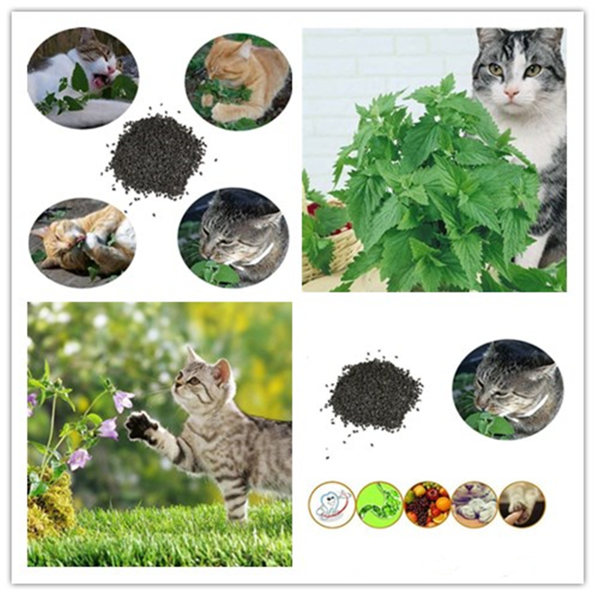 400 Your cat will love you Seeds Catnip Seeds